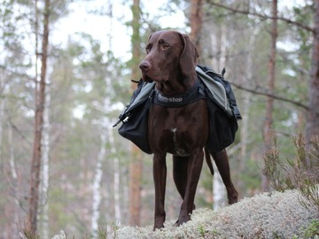 Renting out (per day): Non Stop Amundsen koiranreppu L-koko