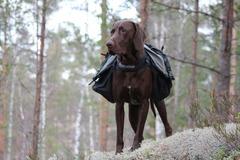 Vuokrataan (päivä): Non Stop Amundsen koiranreppu L-koko