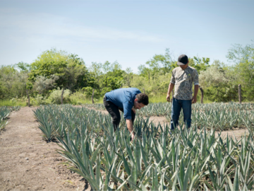 Discover: Mezcal Ranch Experience