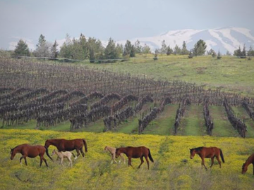 Discover: Golan Heights Wine Tour