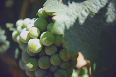 Discover: Galilee Wine Tour