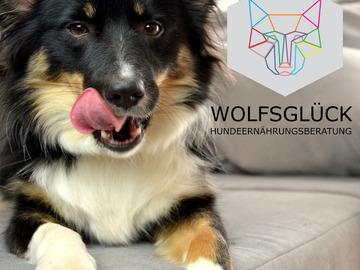 Dienstleistung: WOLFSGLÜCK Hundeernährungsberatung