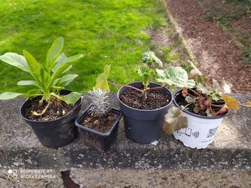 Vente: 1 lot de 4 plantes