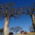 Réserver (avec paiement en ligne): Trekking discovery of Makay - Madagascar