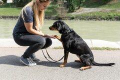 Dienstleistung: professionelles Hunde Verhaltenstraining