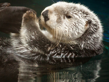 Selling with online payment: TAKING A SOAK - SEA OTTER