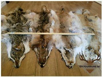 Verkaufen: Peaux de coyote