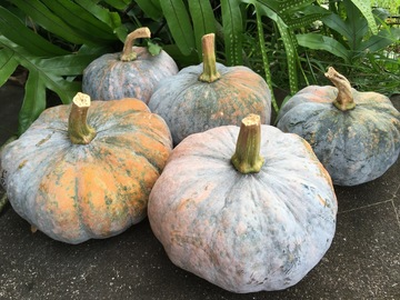 Share or Trade: Kabocha squash for trade or sale