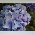 Selling with online payment: Flower Greeting Cards