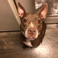 Available: Hershey