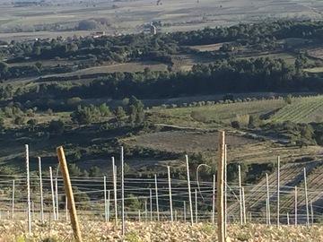 Vente avec paiement en direct: Grands vins du Languedoc
