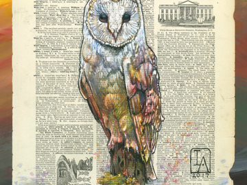 "Selling with online payment: Barn Owl Illustration on Page - 11"" x 14"" Archival Print"