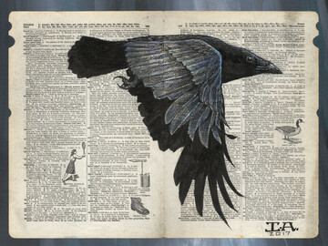 "Selling with online payment: Crow in Flight illustration on page - 11"" x 14"" Archival Print"