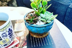 Selling with online payment: DIY Succulent Workshop Kit