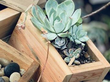 Selling with online payment: Wooden Succulent Planter DIY KIT