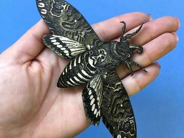 Selling with online payment: Deaths Head Moth Magnet - Lasercut Wood