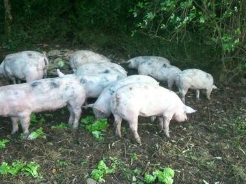 Vente avec paiement en direct: Colis 6 Kg de Porc élevé en Plein Air