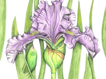Online Payment - Group Session - Pay per Course : Nature Journaling and Botanical Illustration - 3 Classes