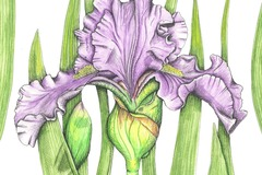 Online Payment - Group Session - Pay per Course: Nature Journaling and Botanical Illustration - 3 Classes