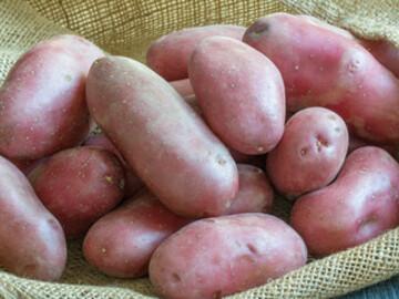 Vente avec paiement en direct: Pommes de terre frite/purée en sac de 25 kg