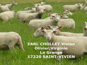 Vente avec paiement en direct: Vente à la ferme colis agneaux