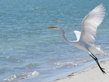 Selling with online payment: 4x6 Metal Prints: Florida Wildlife