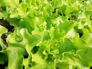 Vente avec paiement en direct: Légumes de saison