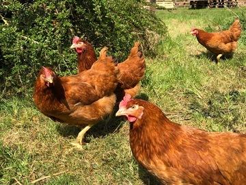Vente avec paiement en direct: Pommes de terre;  œufs plein air