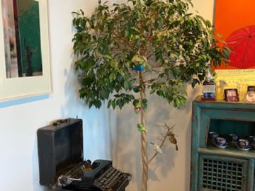 Selling:  Ficus tree