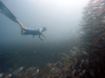Freediving courses: Molchanovs Wave 1 Freediving in Perhentian island, Malaysia
