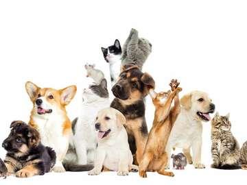 Offre: Visites et promenades d'animaux