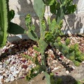 Vente: Cactus à vendre