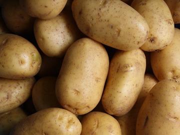 Vente avec paiement en direct: pommes de terre primeur filet de 5 kgs