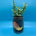 Selling with online payment: Wine Bottle Succulent Planter