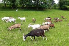Vente avec paiement en direct: Fromages de chèvre à la ferme