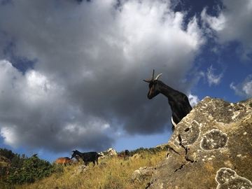 Vente avec paiement en direct: Pays'âmes, l'âme d'un pays à travers un troupeau...