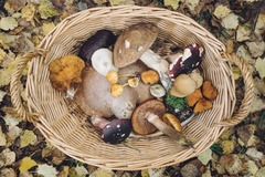 Online Payment - 1 on 1 : Foraging for Wild Foods