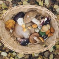 Online Payment - 1 on 1: Foraging for Wild Foods