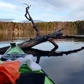 Vuokrataan (päivä): Seabird Åfjord kajakki