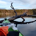 Renting out (per day): Seabird Åfjord kajakki