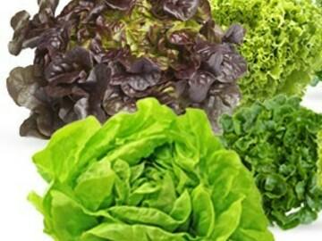 Vente avec paiement en direct: Salade verte