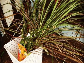 Share or Trade: Lemon grass