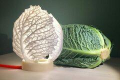 Workshop Angebot (Termine): Vom Salat zum Lämpli