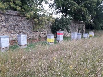 Les miels : Miel du Rucher de Pleucadeuc