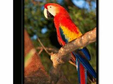 Buy Now: Wholesale Trends International Macaw Parrot 3-D Printed Frame In