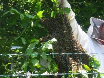 Les miels : Miel du Rucher de Le Cours