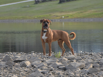 Dienstleistung: Hundetraining Waldviertel - Hollabrunn