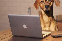 Dienstleistung: Online Hundeschule
