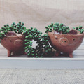 Selling with online payment: Miss Piggy Planters