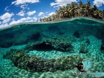 Freediving courses: Freediving Course Level 1